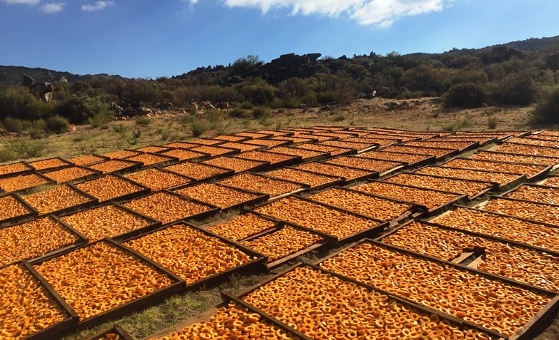 Dried fruit production