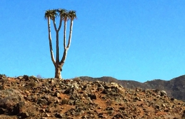 Domorogh Pass (Richtersveld NP)