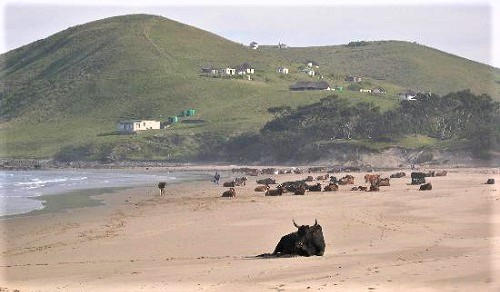 Mbotyi beach