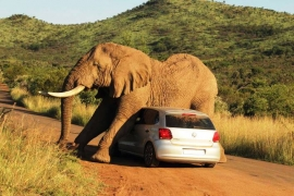 Close encounter on a game drive